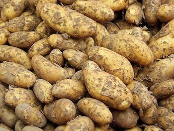 Motiv: Kartoffeln